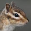 나의다람쥐