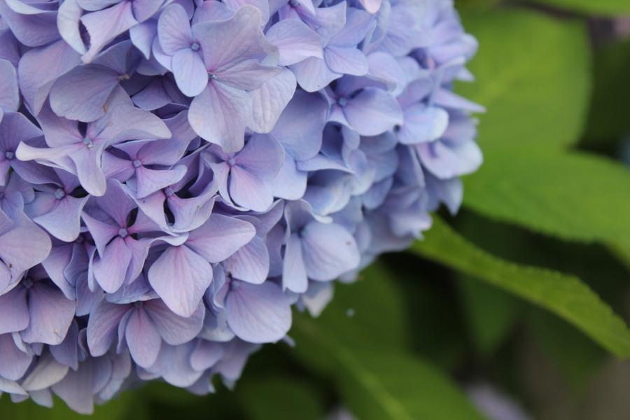 꽃이 핀다
