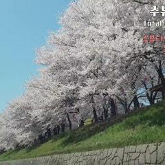눈이 부시게 꽃구경하러 수뷰티센터 광명점으로!