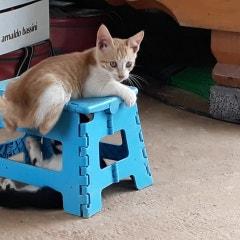 다믈농장 아기 고양이들 놀이 재롱
