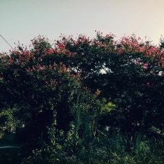 늦여름의 풍경