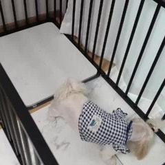 독톡 커스텀 울타리 조립가능한 강아지울타리 추천