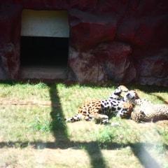 광주패밀리랜드에 우치동물원 다녀왔어요