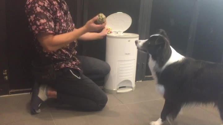 보호자의 행동이 강아지 식생활에 미치는 영향