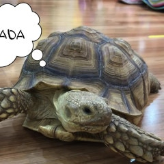 거북이가 크래다에 찾아왔어요!