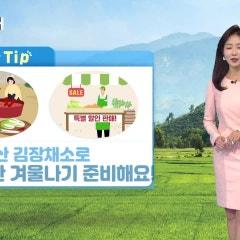 농업전망대(2019.11.16)- 엽근채소, 양념채소관측 11월호