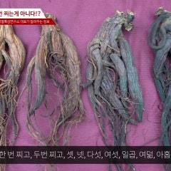 구증구포 홍삼의 오류, 홍삼은 아홉번 찌는게 아니다?