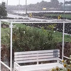 <구좌읍숙소 평대림> 눈이 오는 제주
