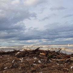 2020.09.07.17:45.태풍이 휩쓸고간 낙산해변. 태풍쓰레기가 엄청납니다.
