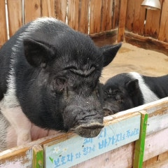 강원도 아이와 가볼만한곳 숲속에동물농장 동물과 교감하기