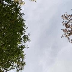 6학년의 즐거운 학교생활과 아름다운 경희초 모습