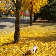 가을단풍 맛집, 미사리경정공원에서 단풍구경,피크닉