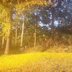 아, 가을이 이렇게 후두둑...