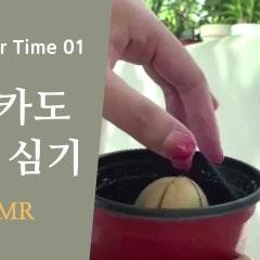 (식물일기 유튜브 시작) 01. 아보카도 씨앗 심기