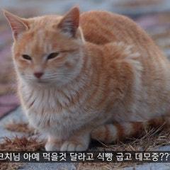 [4K 힐링영상] 귀여운 고양이들 먹방 보고 가세요 😻 FEEDING CUTE STARY CATS [EOS R5 + RF 100-500MM ANIMAL EYE AF TEST]