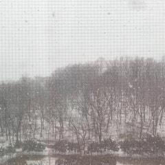 눈이 또 온다..