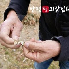 [영상] 원조 양평외갓집체험마을 '이삭줍기'