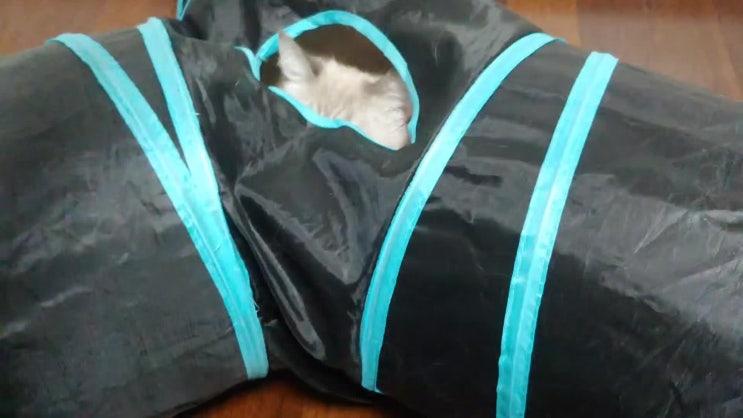 고양이 잠자는 자세 모아봤어요~( 브숏 & 샤미즈 )