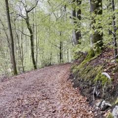 다시 Kai 할아버지댁이다. 푹신한 낙엽길 산책... 기분 좋은 토요일 아침이다 - 노르딕파크 북유럽/덴마크 컬렉팅투어