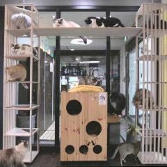 굿트리 자체제작 캣타워 캣폴 고양이호텔 스카이빌리지