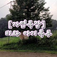 [자연목장]비와 아기목부