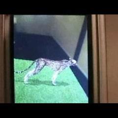 오다이바 후지 TV 에서의 즐기는 AR(Augmented Reality-증강현실)