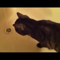 [동영상] 물장난 포비
