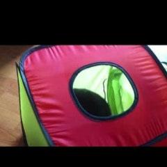 [동영상] 포비가 무서워요