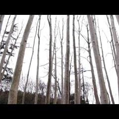 홍성 8경, 그림이있는정원 수목원