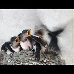 우리가 아는 새들 우리가 모르는 새들_생태동화작가 권오준의 우리 새 이야기