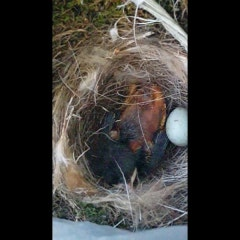아기새, 태어나다