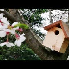 거북이마을 봄 드론 영상