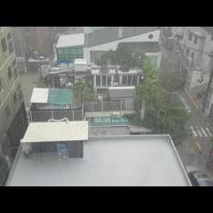 오랜만에 내린 비다운 비