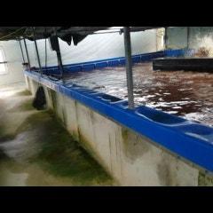 친환경 새우양식 바이오플락 최고의 고염 해수 유용미생물 최초개발