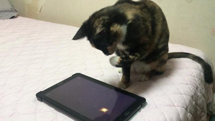 [고양이키우기] 고양이랑 놀아주는 방법 몇 가지