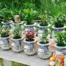 스스로 물 조절하는 수경재배 관리가 쉬운 수경식물
