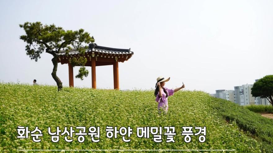 전남.광주 가볼만한곳 화순 여행코스 남산공원 메밀꽃 풍경 황홀한 하얀 추억